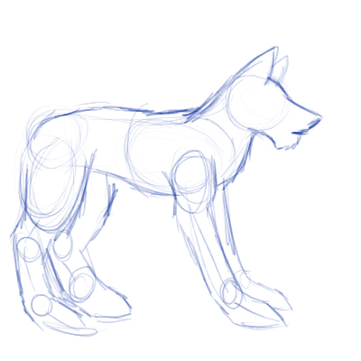 How to draw a wolf body - photo#10